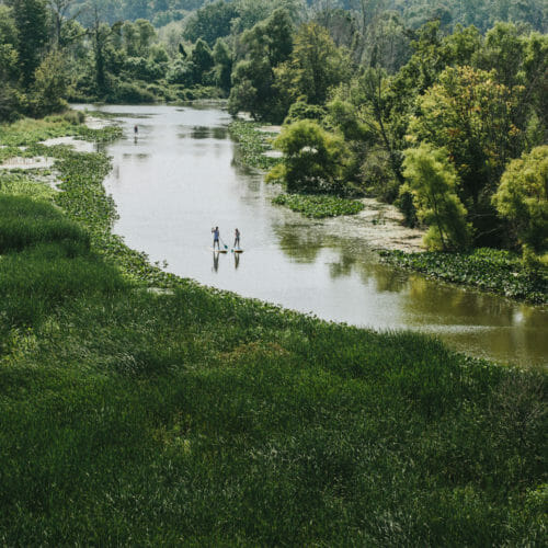 Paddleboarders traveling along a winding river surrounded by lush green trees and marshland at Galien River Marsh Trail in New Buffalo, Michigan.