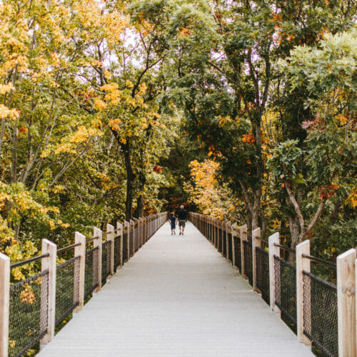 Trees surround the path to the overlook at Galien River County Park in New Buffalo, Michigan.